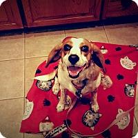 Adopt A Pet :: Mimi - Santa Ana, CA