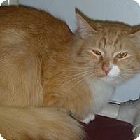 Adopt A Pet :: Alexander - Hamburg, NY