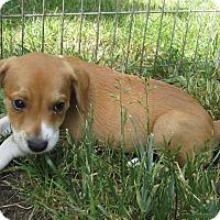 Adopt A Pet :: Tweak - Middletown, RI