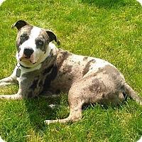 Adopt A Pet :: Eli - Toledo, OH