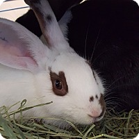 Adopt A Pet :: Bitsy and Beans - Conshohocken, PA