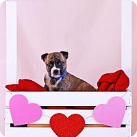 Adopt A Pet :: Ritchie - Waldorf, MD