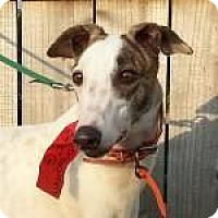 Adopt A Pet :: MAC,S DANCEQUEEN - Grandville, MI