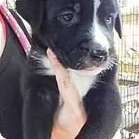 Adopt A Pet :: Pia - Gainesville, FL