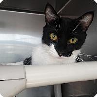 Adopt A Pet :: Suri - Elyria, OH