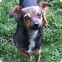 Adopt A Pet :: Jake from StateFarm - Aurora, CO