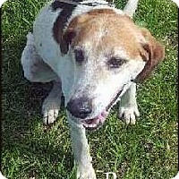 Coonhound (Unknown Type) Mix Dog for adoption in Ottumwa, Iowa - Roscoe