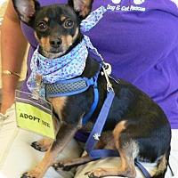 Adopt A Pet :: SQUEAK - Fort Lauderdale, FL