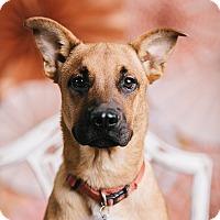 Adopt A Pet :: King - Portland, OR