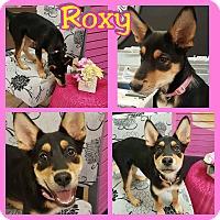 Adopt A Pet :: Roxy - Mesa, AZ