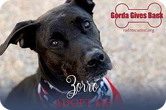Labrador Retriever Mix Dog for adoption in Tucson, Arizona - Zorro