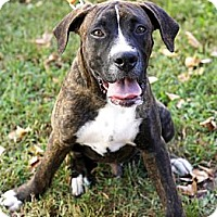 Adopt A Pet :: Toto in CT - Manchester, CT
