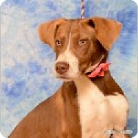 Adopt A Pet :: Lulu - Pittsboro, NC