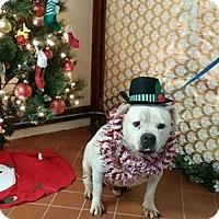 Adopt A Pet :: Zeke - Elyria, OH