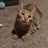 Adopt A Pet :: Phallon - Sedalia, MO
