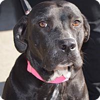 Adopt A Pet :: Georgia - CRANSTON, RI