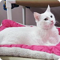 Adopt A Pet :: Pearl - Howell, MI