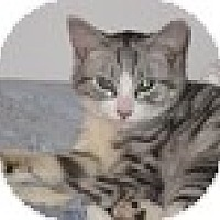 Adopt A Pet :: Sasha - Vancouver, BC