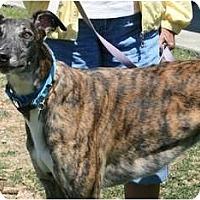 Adopt A Pet :: Blazing Myles