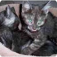 Adopt A Pet :: Bentley & Bond - Arlington, VA