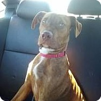 Adopt A Pet :: Rudy - Laingsburg, MI