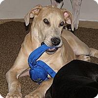 Adopt A Pet :: Bruiser - Woodstock, IL