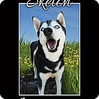 Adopt A Pet :: Sketch - Clearwater, FL