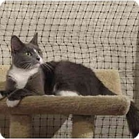 Adopt A Pet :: Katrina - Alexandria, VA