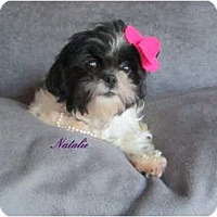 Adopt A Pet :: Natalie - South Amboy, NJ