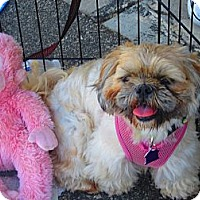 Adopt A Pet :: Missy - Culver City, CA