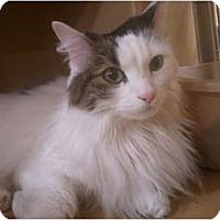Adopt A Pet :: Tessa - Irvine, CA