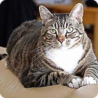 Adopt A Pet :: Ozzie - Sacramento, CA