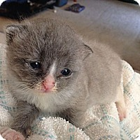 Adopt A Pet :: Paddington - Union, KY