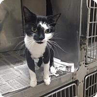 Adopt A Pet :: Agatha - Lancaster, VA