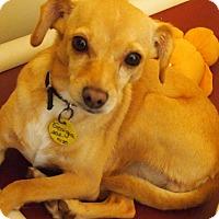 Adopt A Pet :: Georgia - Prole, IA