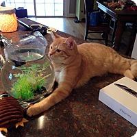 Adopt A Pet :: Butch Cassidy - Clarkson, KY