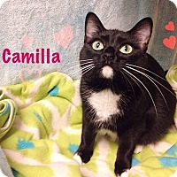 Adopt A Pet :: Camilla - Foothill Ranch, CA