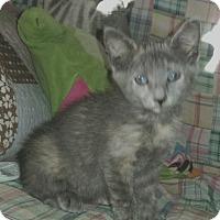 Adopt A Pet :: Tutti Fruiti - Winterville, NC