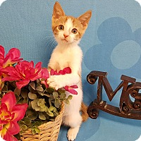 Adopt A Pet :: Lyla - Coral Springs, FL