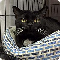 Adopt A Pet :: Richie - Lombard, IL