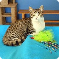 Adopt A Pet :: Spencer - Glendale, AZ