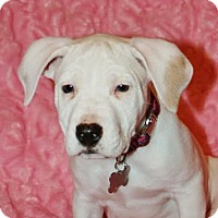 Adopt A Pet :: Lizzy-Adopted! - Detroit, MI