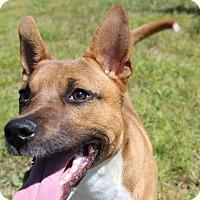 Adopt A Pet :: Dutchess - Brattleboro, VT