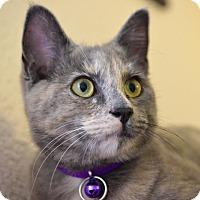 Adopt A Pet :: Meadow - Studio City, CA
