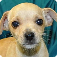 Adopt A Pet :: Graham - Erwin, TN