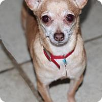 Adopt A Pet :: Tinkerbell - Morganville, NJ