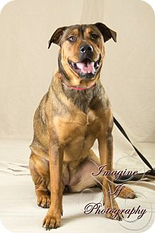 Rottweiler/Shepherd (Unknown Type) Mix Puppy for adoption in Newcastle, Oklahoma - Wrinkles X