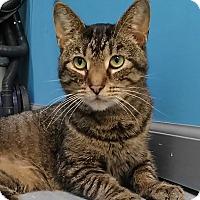 Adopt A Pet :: Ben - Austintown, OH