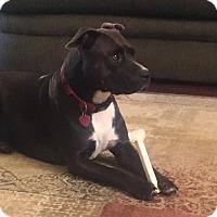 Adopt A Pet :: Tootsie - oklahoma city, OK