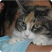 Adopt A Pet :: Pastel,FL - Miami Beach, FL